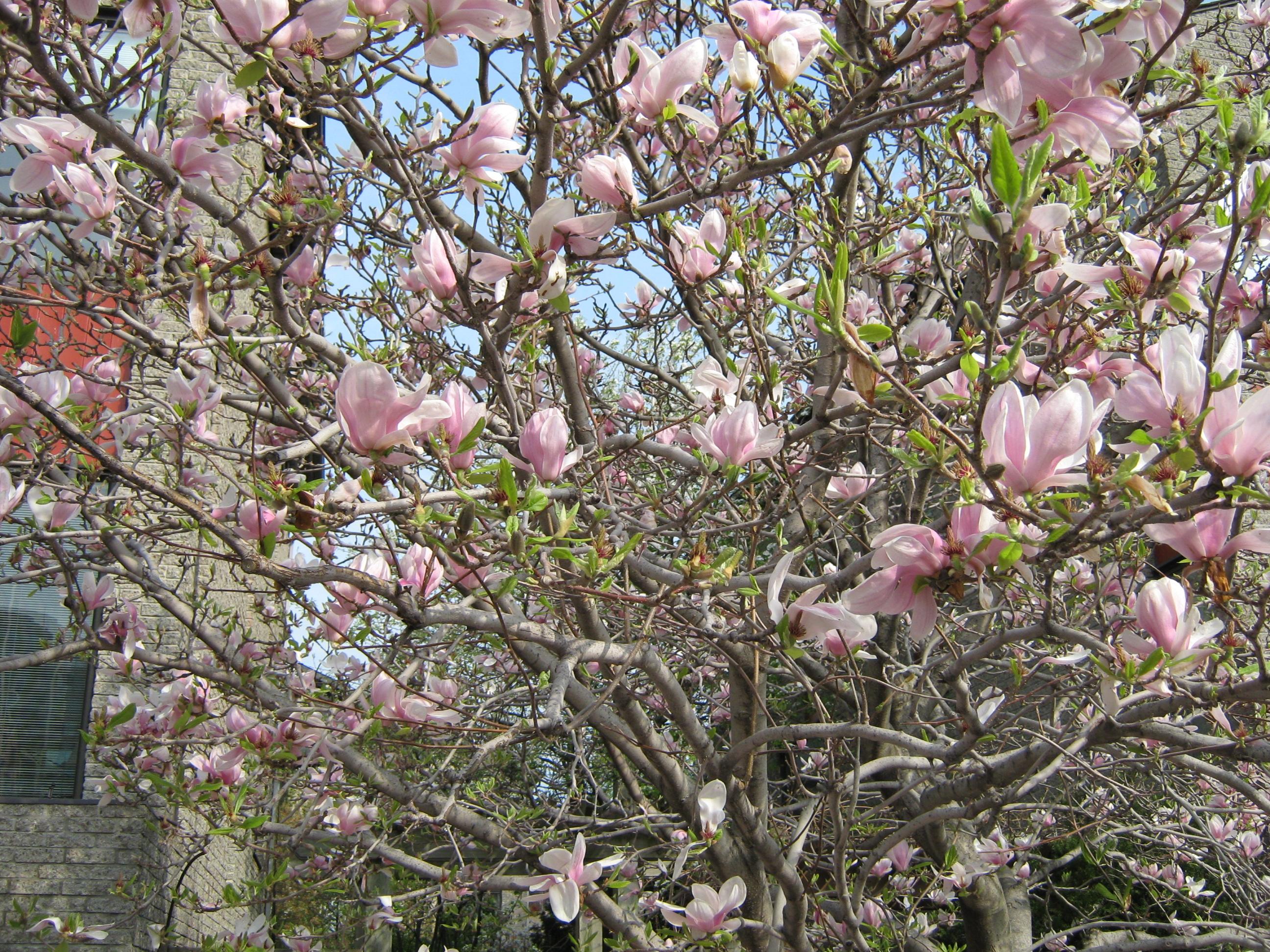 5429be0650c Fleurs du Québec jour après jour